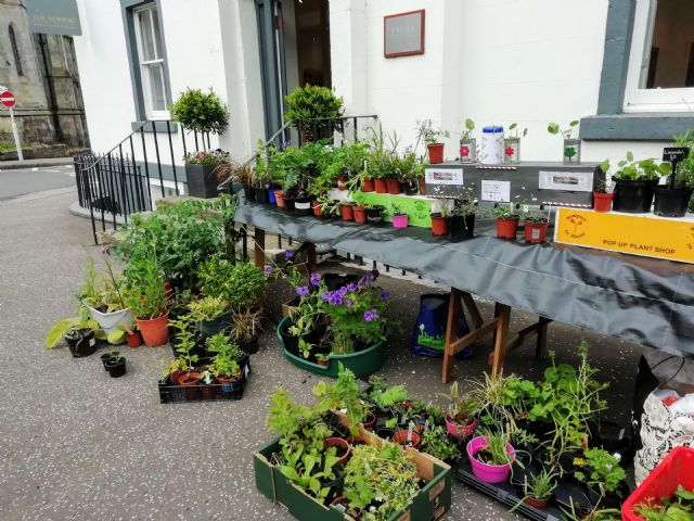 <h3>In Bloom Plant Stall</h3><p>Newport Summer Festival</p>